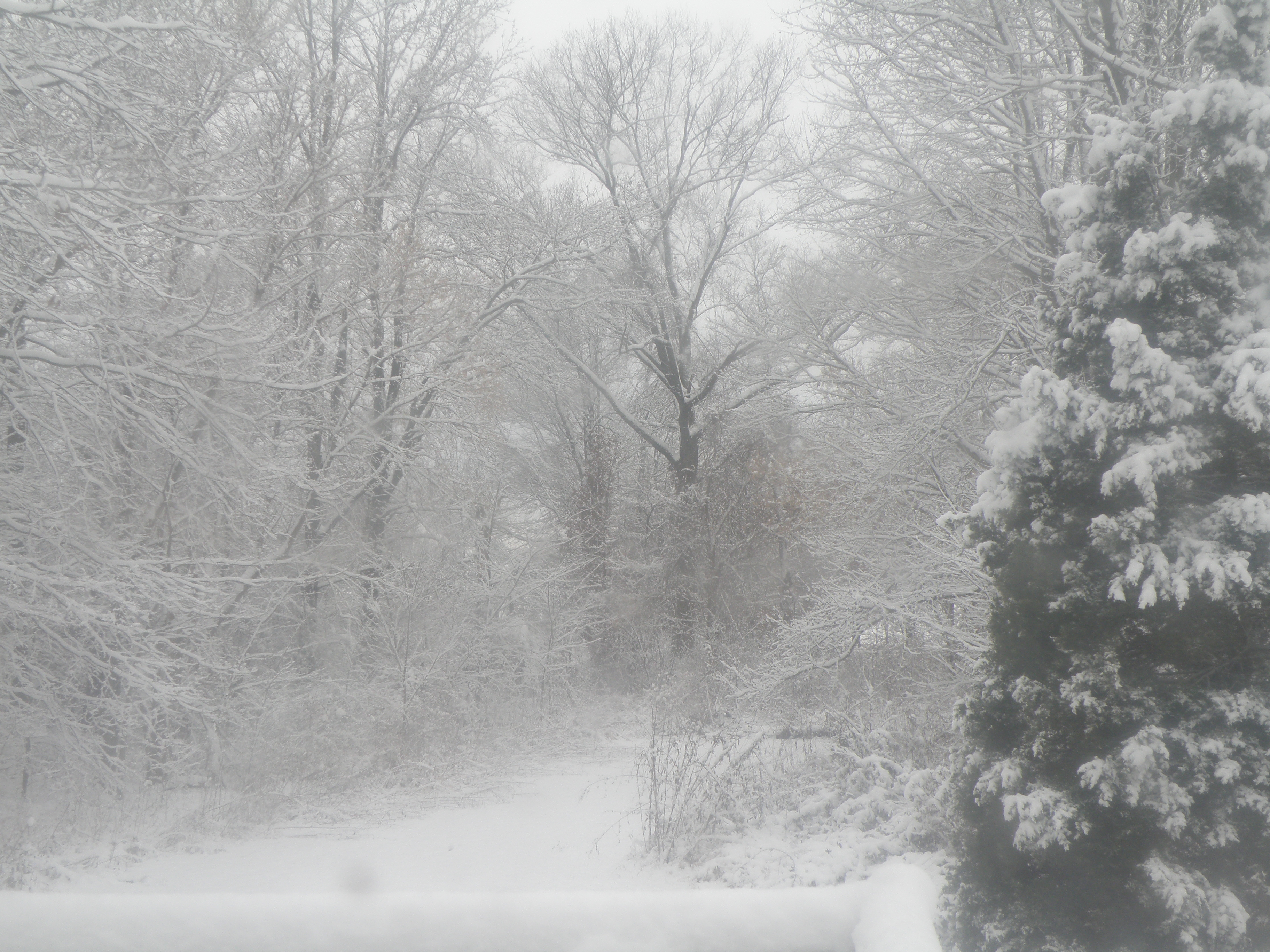 pictures of blizzards wwwimgkidcom the image kid has it